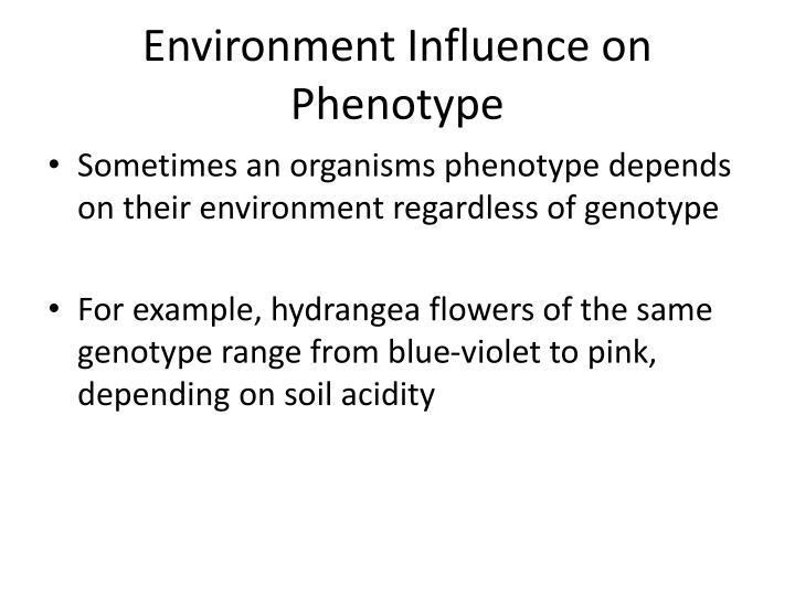 Environment Influence on Phenotype
