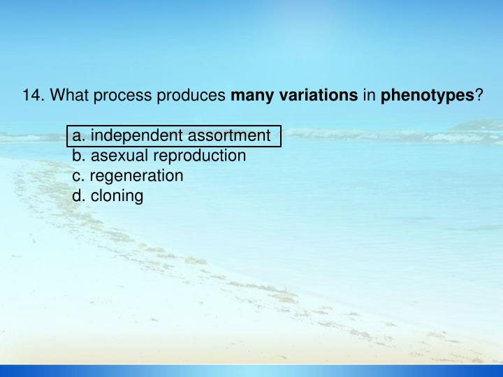 14. What process produces