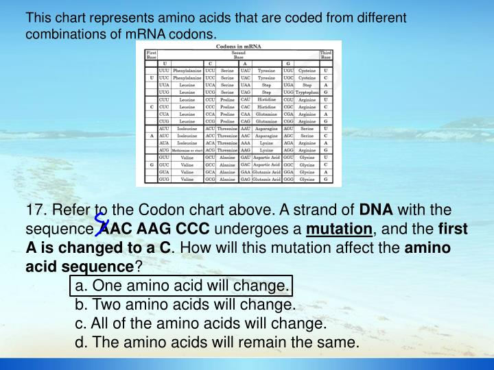 This chart represents amino acids that are coded from different combinations of mRNA codons.