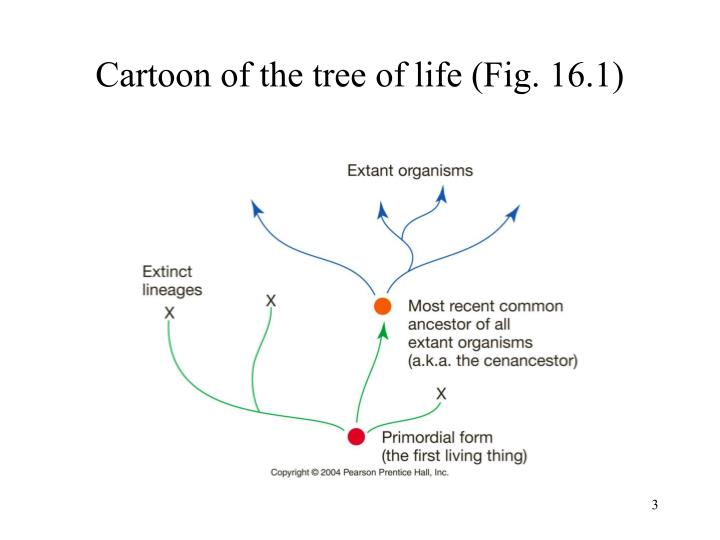Cartoon of the tree of life fig 16 1