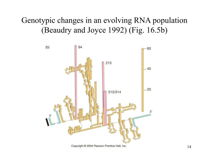 Genotypic changes in an evolving RNA population (Beaudry and Joyce 1992) (Fig. 16.5b)
