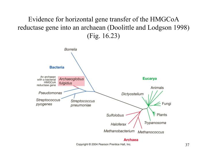 Evidence for horizontal gene transfer of the HMGCoA reductase gene into an archaean (Doolittle and Lodgson 1998) (Fig. 16.23)