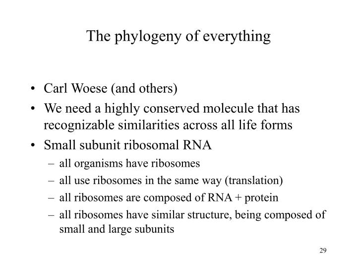 The phylogeny of everything