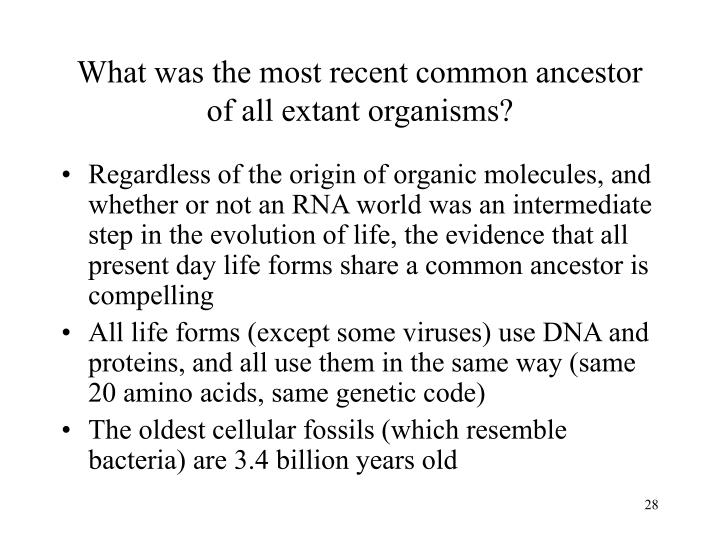 What was the most recent common ancestor of all extant organisms?