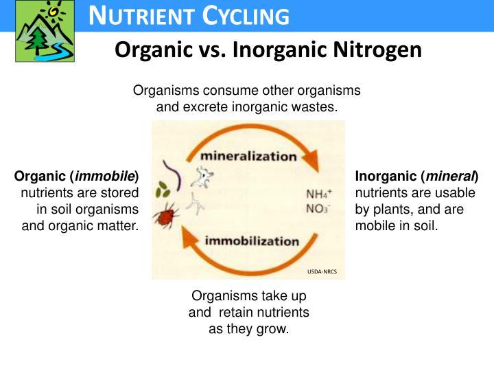 Organic vs. Inorganic Nitrogen