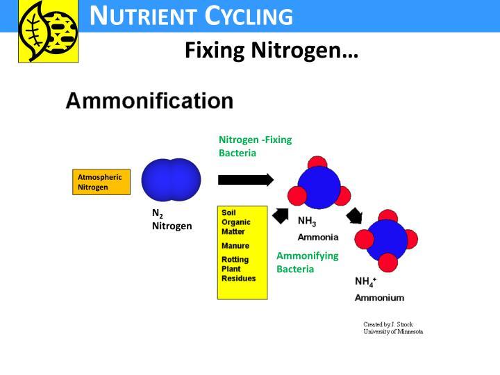Fixing Nitrogen…
