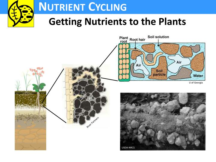 Getting Nutrients to the Plants