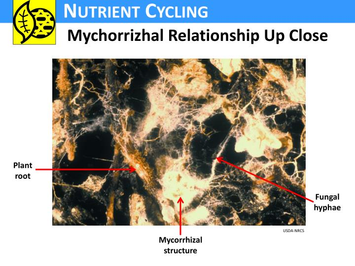 Mychorrizhal Relationship Up Close