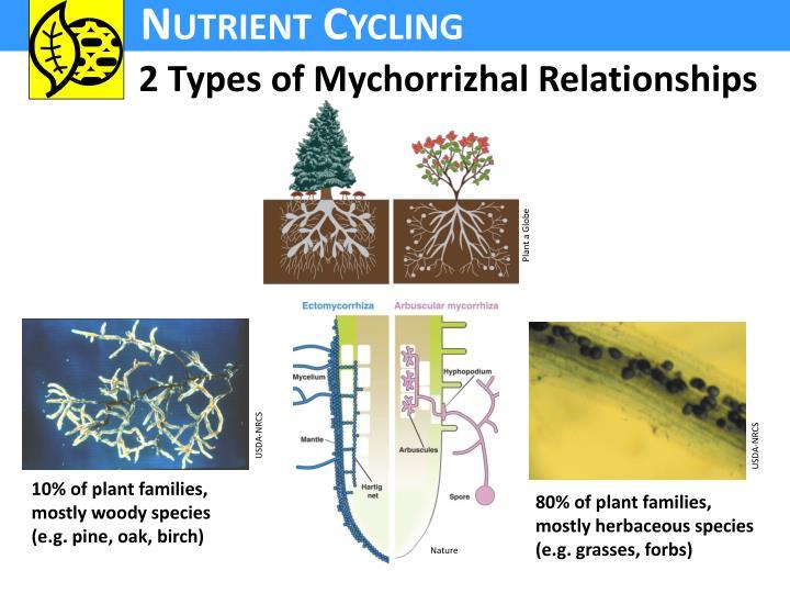 2 Types of Mychorrizhal Relationships