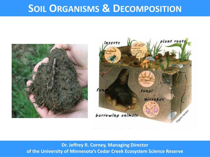 Soil Organisms & Decomposition