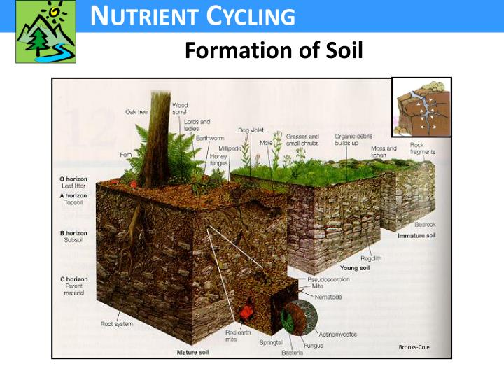 Formation of Soil