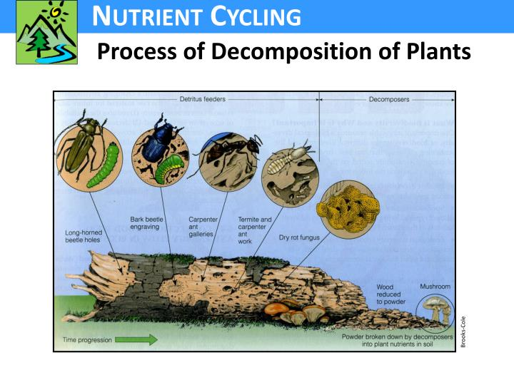 Process of Decomposition of Plants