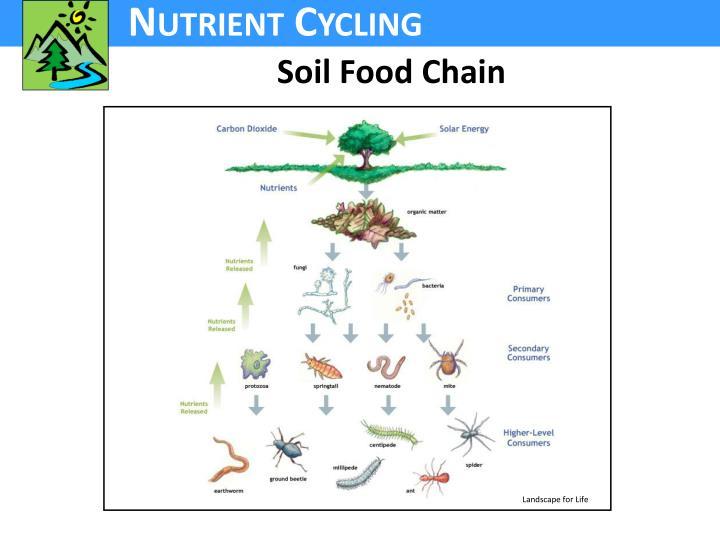 Soil Food Chain
