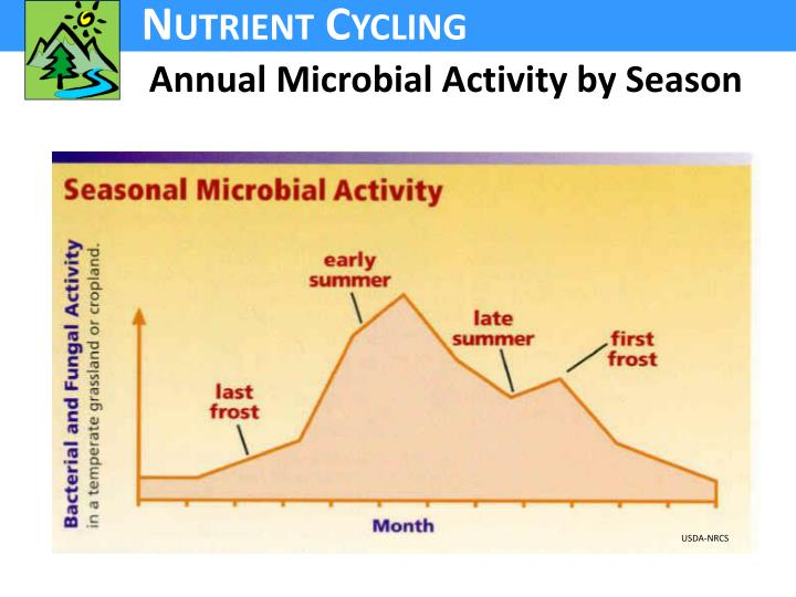 Annual Microbial Activity by Season