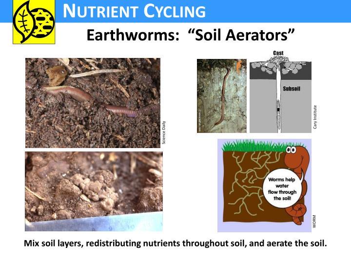 "Earthworms:  ""Soil Aerators"""