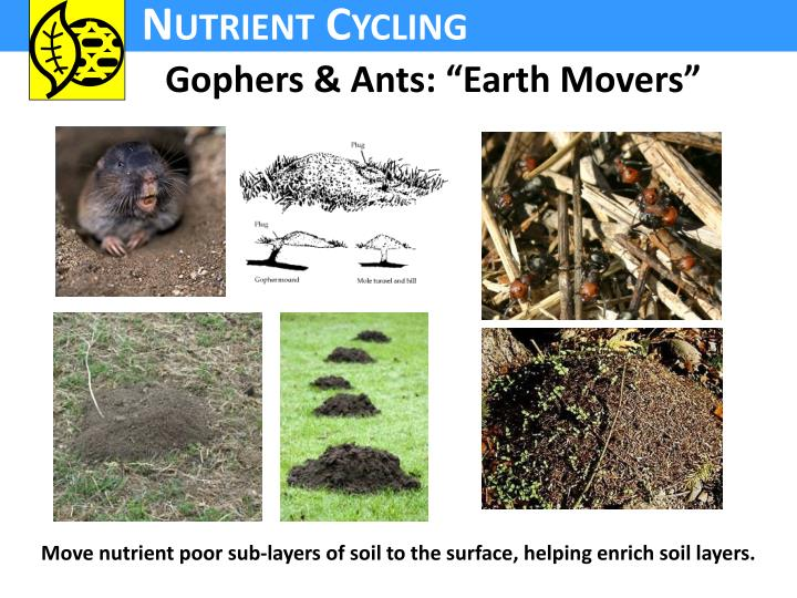 """Gophers & Ants: """"Earth Movers"""""""