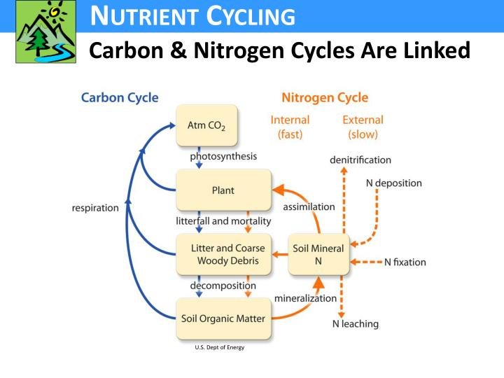 Carbon & Nitrogen Cycles Are Linked