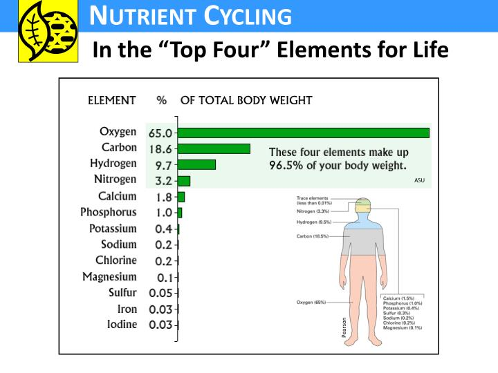 """In the """"Top Four"""" Elements for Life"""