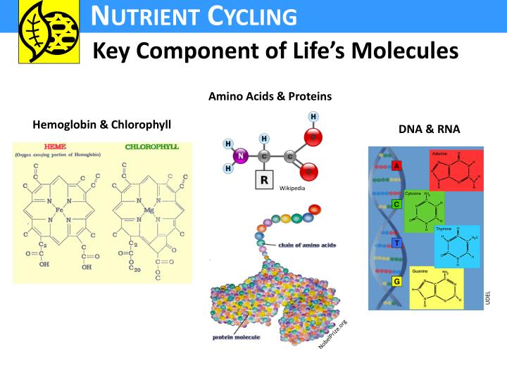 Key Component of Life's Molecules