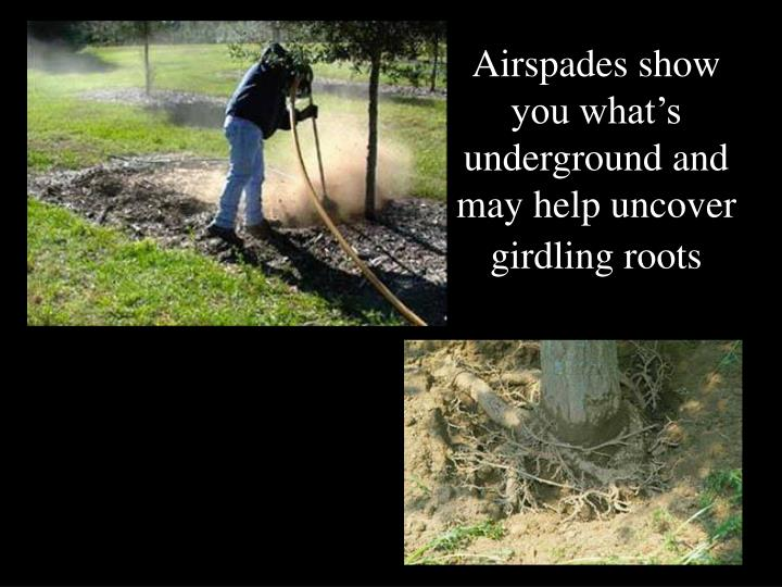 Airspades show you what's underground and may help uncover girdling roots