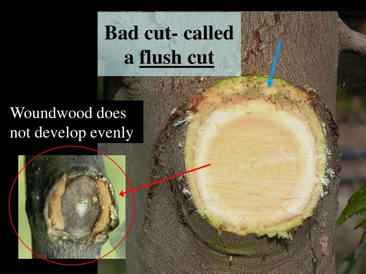 Bad cut- called a