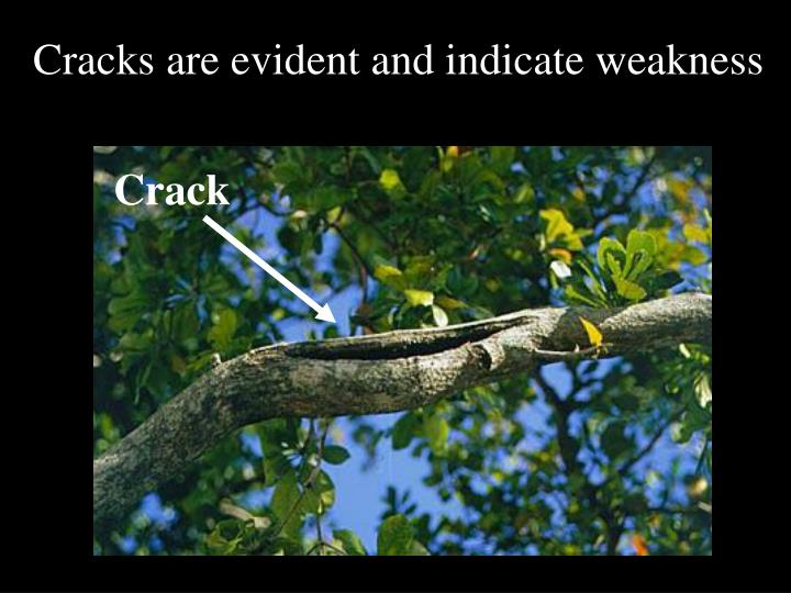 Cracks are evident and indicate weakness