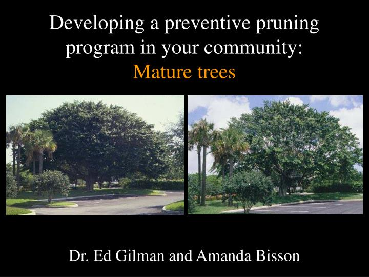 Developing a preventive pruning program in your community mature trees