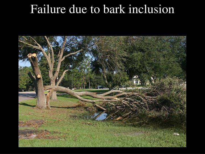 Failure due to bark inclusion
