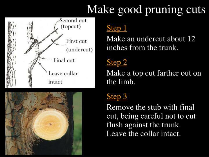 Make good pruning cuts