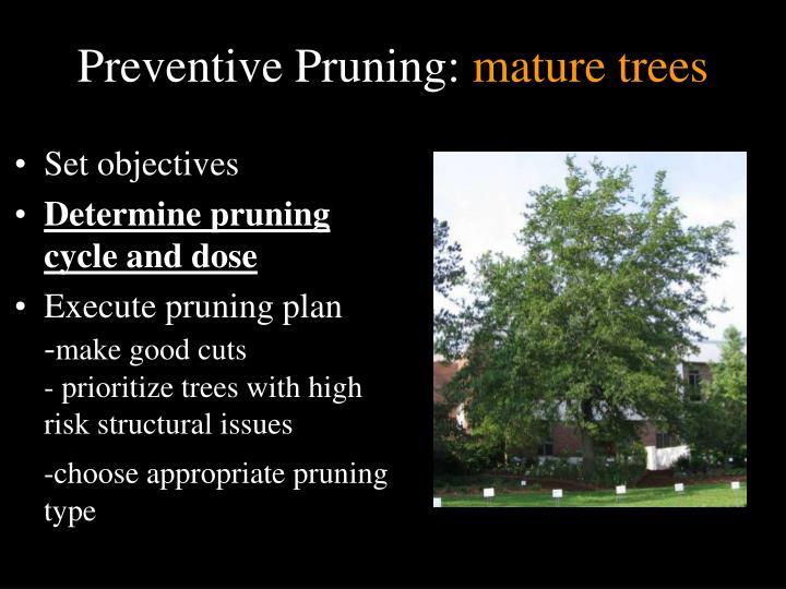 Preventive Pruning: