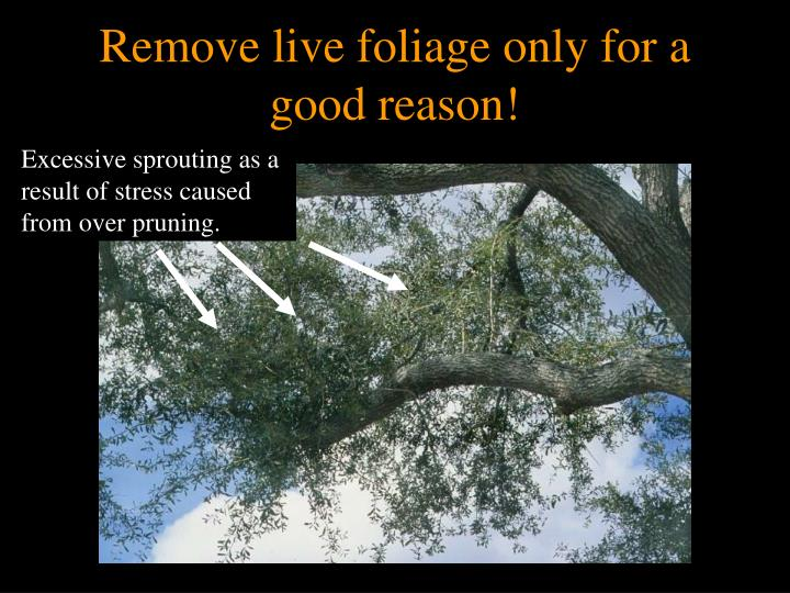 Remove live foliage only for a good reason!