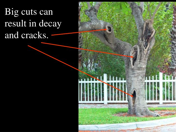 Big cuts can result in decay and cracks.