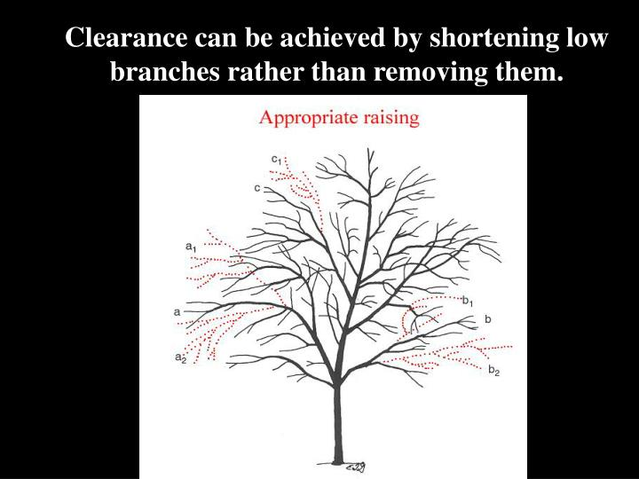 Clearance can be achieved by shortening low branches rather than removing them.