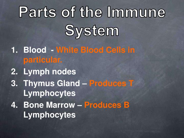Parts of the Immune System