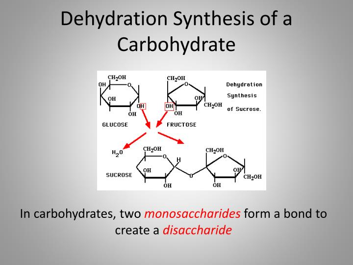 Dehydration Synthesis of a Carbohydrate