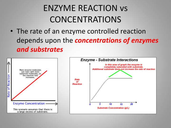 ENZYME REACTION vs CONCENTRATIONS