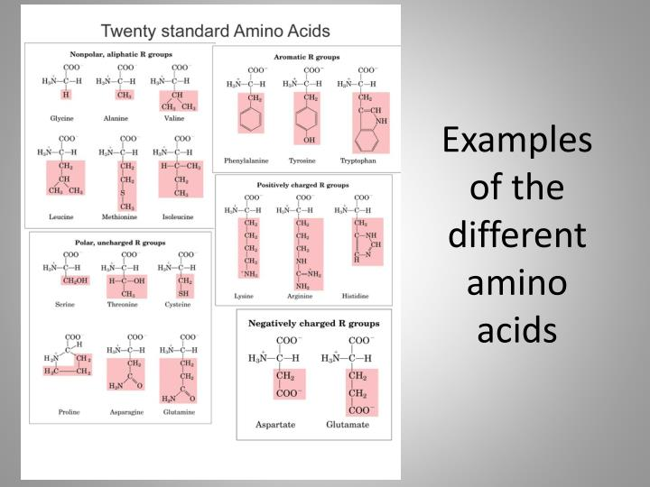 Examples of the different amino acids