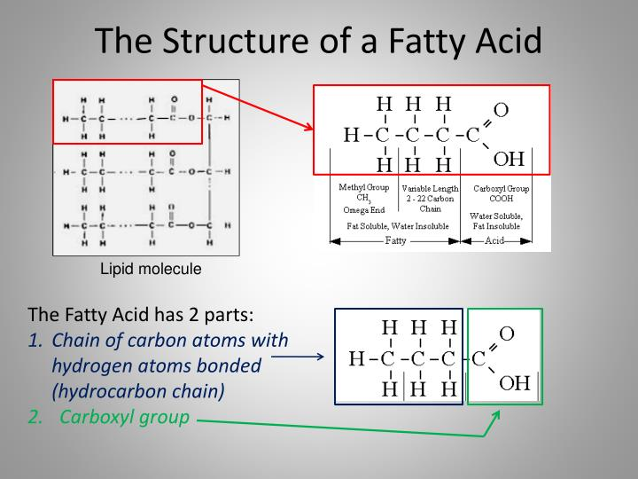 The Structure of a Fatty Acid
