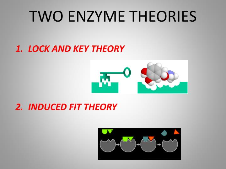 TWO ENZYME THEORIES