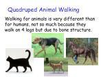 quadruped animal walking