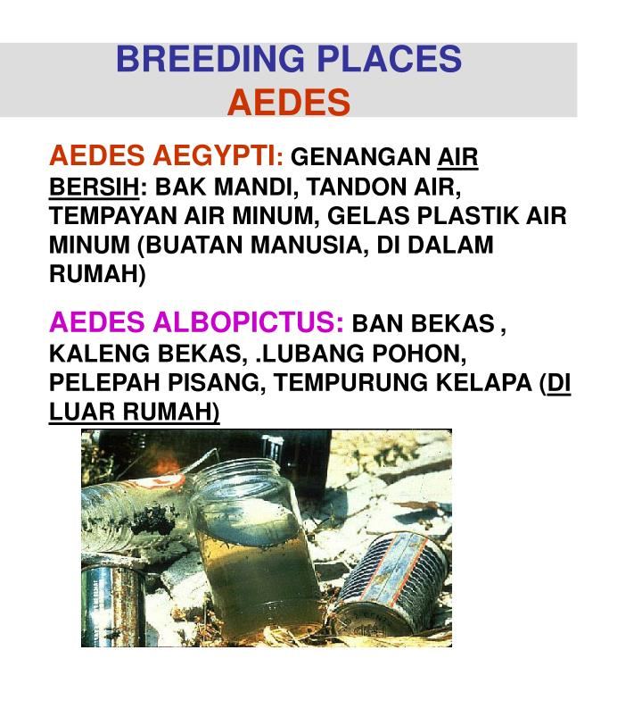 BREEDING PLACES