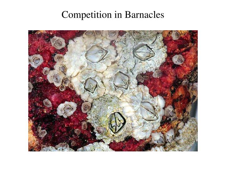 Competition in Barnacles