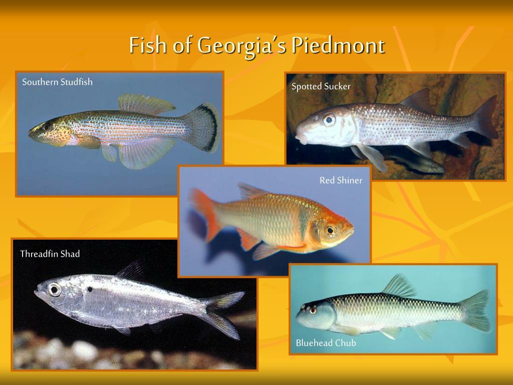 Ppt Georgia S Piedmont Habitat Powerpoint Presentation