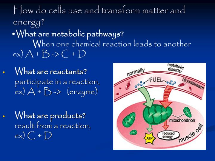 How do cells use and transform matter and energy?