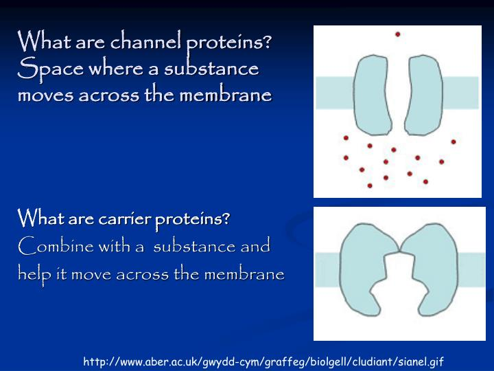 What are channel proteins? Space where a substance moves across the membrane