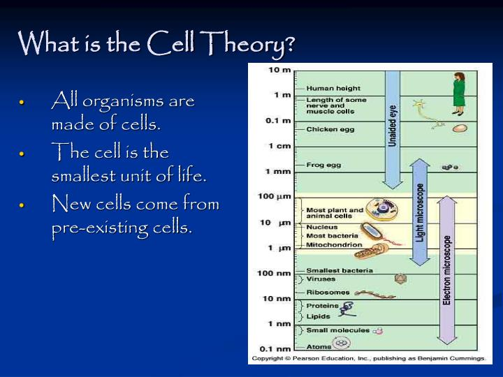 What is the cell theory