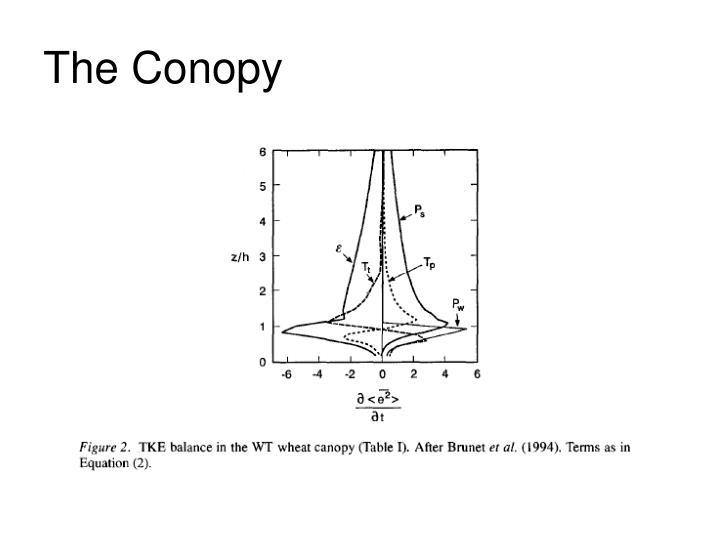 The Conopy
