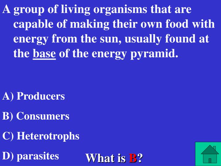 A group of living organisms that are capable of making their own food with energy from the sun, usually found at the
