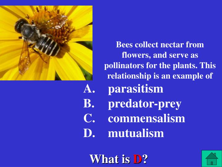 Bees collect nectar from flowers, and serve as pollinators for the plants. This relationship is an example of