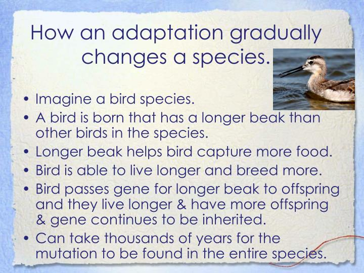 How an adaptation gradually changes a species.
